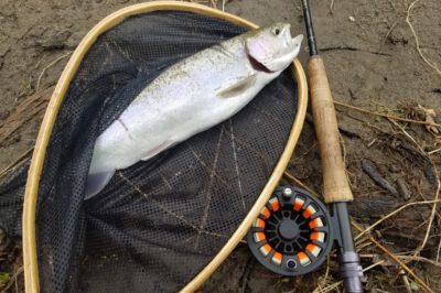 Steelhead on a Fly