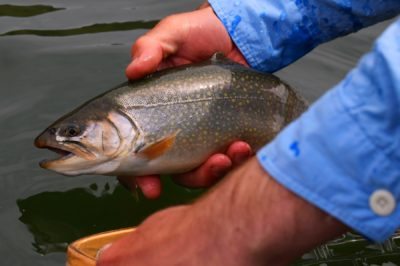 Fly fishing for brook trout and Lahontan cutthroat.