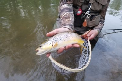trout fishing, brown trout, fishing for trout